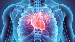 قلب | دانلود پاورپوینت بررسی عملکرد قلبی و عروقی