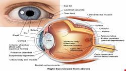 آناتومی | دانلود پاورپوینت آناتومی چشم انسان
